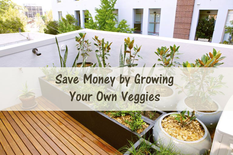 Save Money by Growing Your Own Veggies